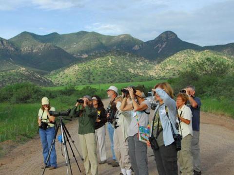 Recorre la escena durante el Southeast Arizona Birding Festival en Tucson
