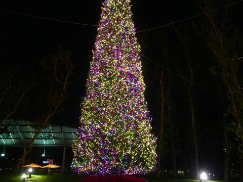 El árbol de Navidad iluminado en Town Center Park